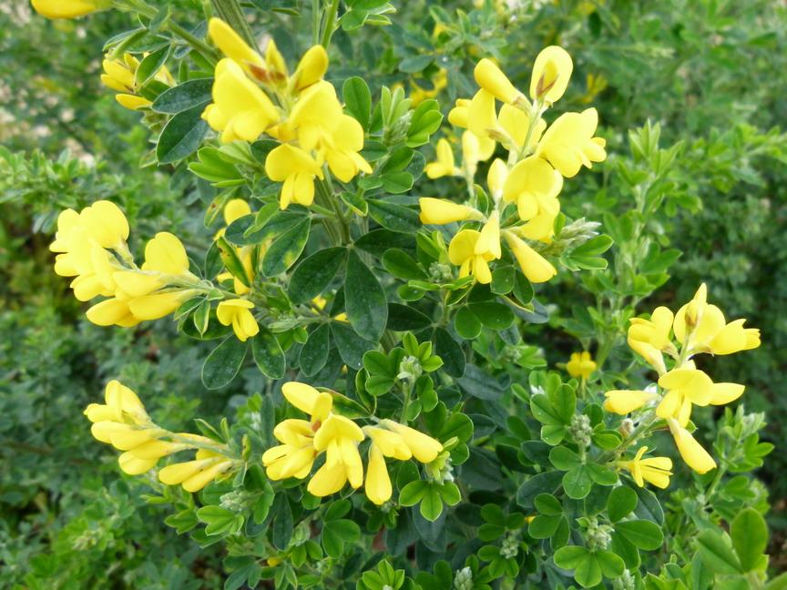Arbustes de grand d veloppement feuillage persistant for Site de plante